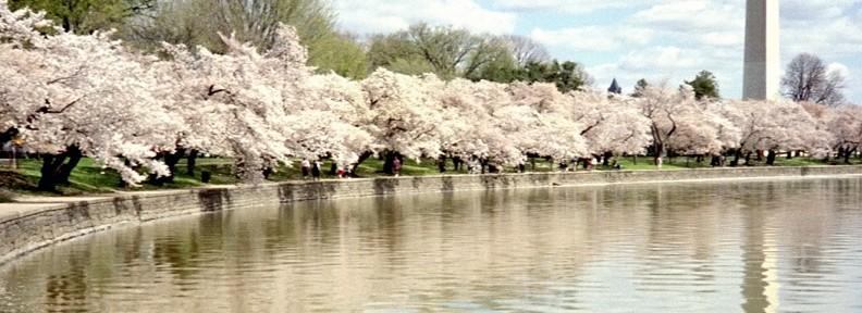 ih-blossoms