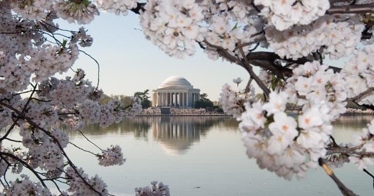 Jefferson_Memorial_-_Cherry_Blossoms